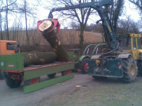 Diedam 5,7t wird beladen mit Eschenholz