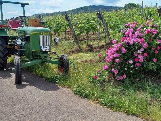 Blütenpracht am Weinbergrand