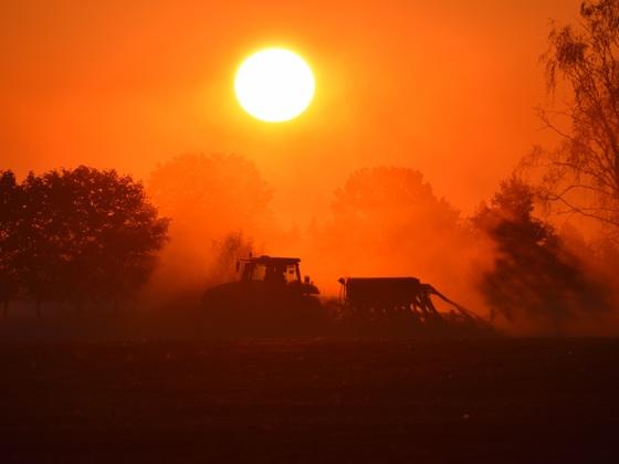 Winterroggensaat bei Sonnenaufgang