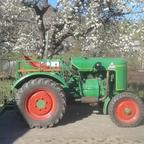 Dieselross im Frühling