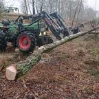 Holz machen