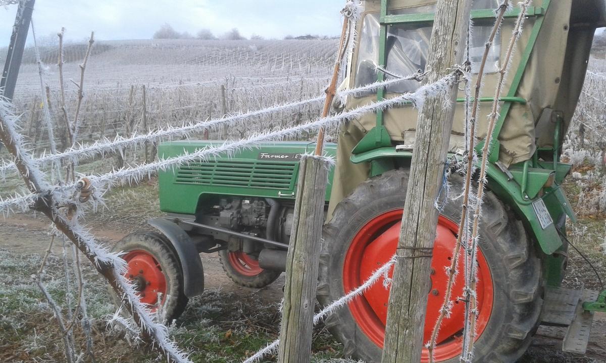 Farmer im Winterweinberg
