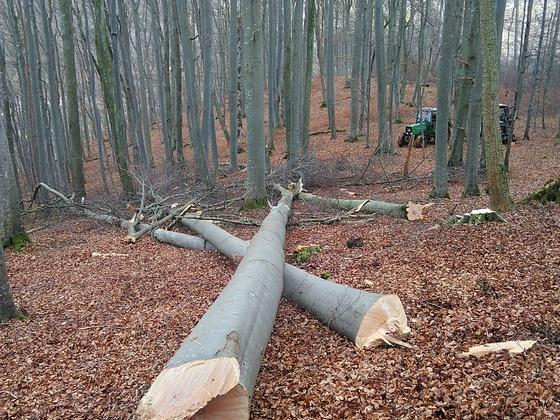 Brennholz 2020
