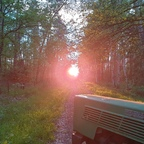 Licht am Ende des Waldes