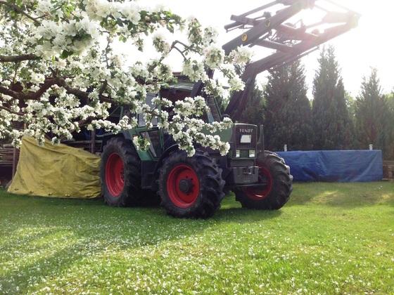 Fendt Farmer 308 LSA - hinter einem Apfelbaum