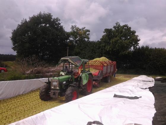 Farmer 108S beim Mais fahren mit Pöttinger EW 2