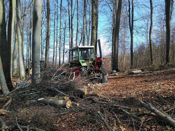 Brennholz machen 2020